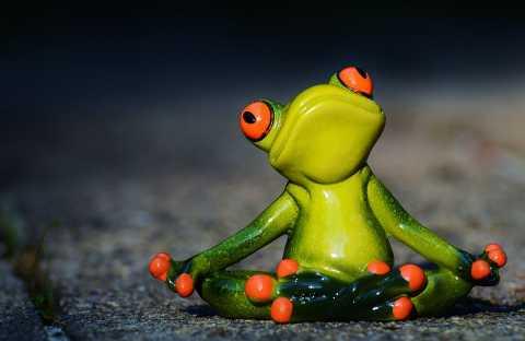 I žába cvičí jogu